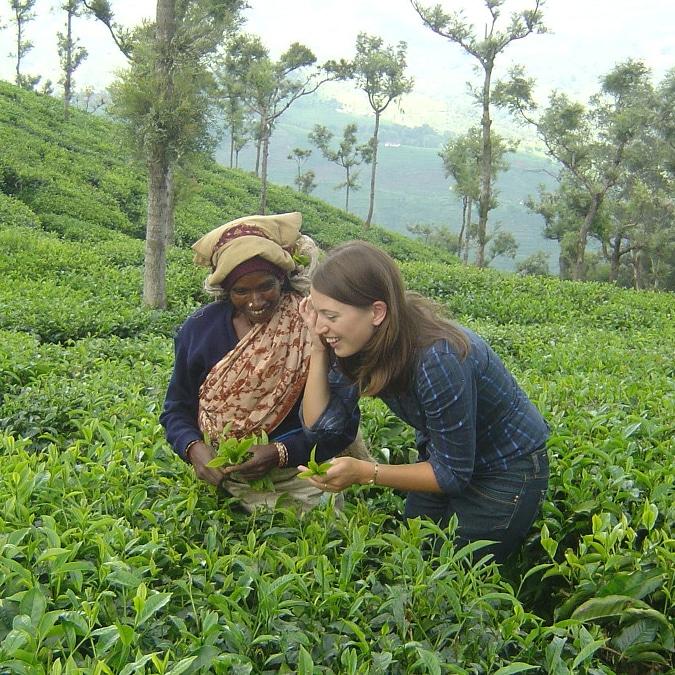 Erica plucking tea leaves
