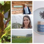 eteaket tea launches Scottish grown tea from Windy Hollow Farm
